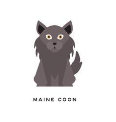 Portrait of maine coon cat adorable feline with vector
