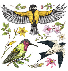 small birds of barn swallow or martlet and parus vector image
