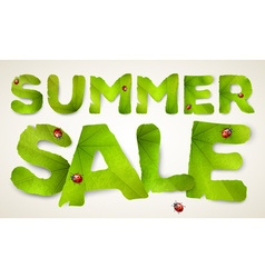 Summer Sale words made from green leaves vector image