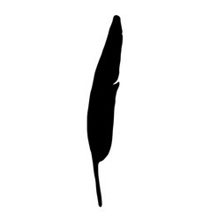 black bird feather silhouette on white background vector image vector image