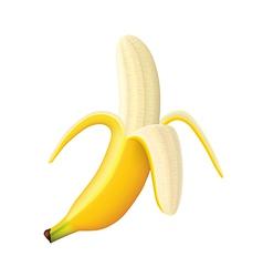 object banana vector image vector image