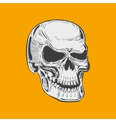 Isolated black and white smiling human skull vector