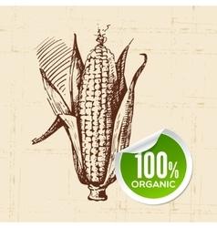 Hand drawn sketch vegetable corn eco food vector