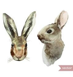 rabbit hare watercolor animal vector image