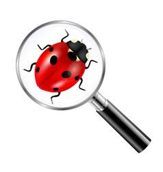black magnifying glass with ladybug vector image