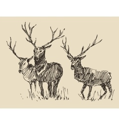 Deers engraving vintage  sketch vector