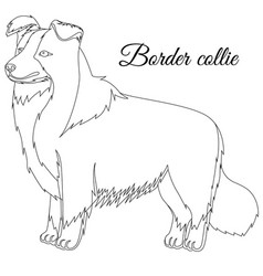 border collie dog outline vector image vector image