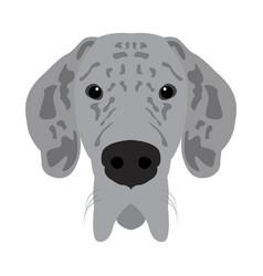 Isolated great dane avatar vector