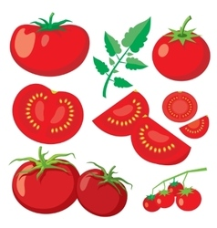 Fresh tomatoes in flat style vector