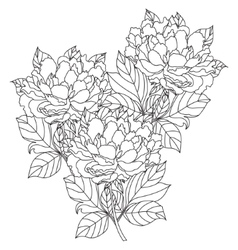 Peony bouquet  coloring book page for vector