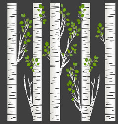 birch trunks in night vector image vector image