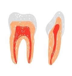 Teeth doodle vector image vector image