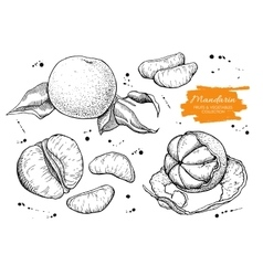 Hand drawn mandarin set engraved vector