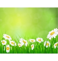 Daisy background summer design vector