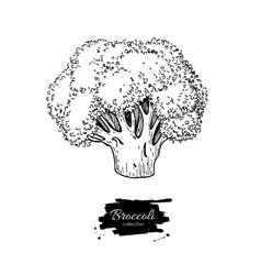 Broccoli hand drawn Vegetable vector image vector image