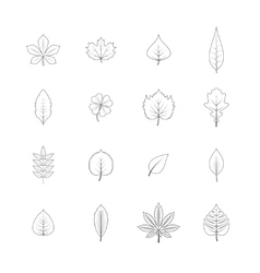 Plant leaves line icons set vector