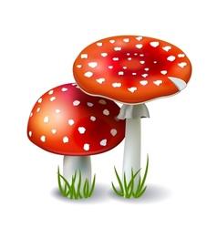 Red mushroom amanita vector