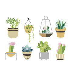 Succulent and cactus set collection in flat style vector