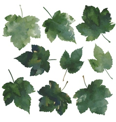 Currant leaves vector