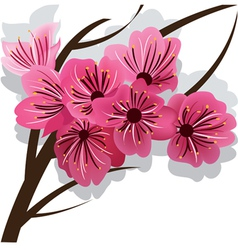 Branch of blooming cherry tree sakura vector
