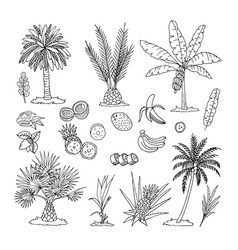 Hand drawn of palm trees vector