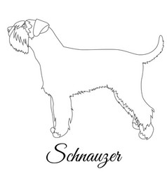 Schnauzer outline vector