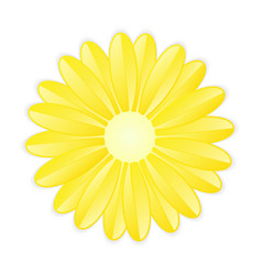 Yellow flower on white background vector