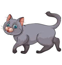 Young gray kitten on white vector