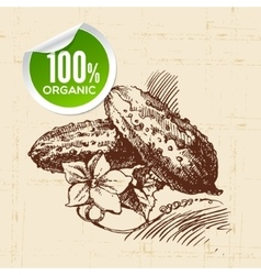 Hand drawn sketch vegetable green cucumber eco vector
