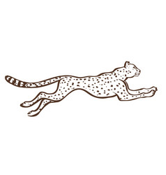 Cheetah running sketch vector