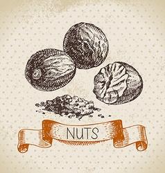 Hand drawn sketch nut vintage background of vector image vector image