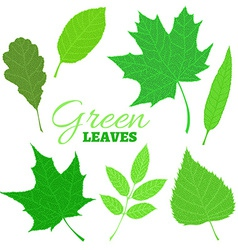 Set of veined green leaves isolated on white vector