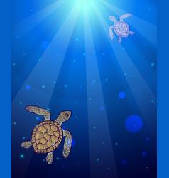 underwater sea scene with two marine turtles vector image