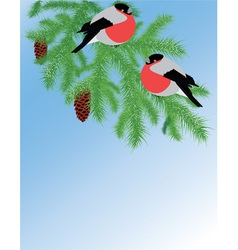 Fur tree branch and bullfinches vector