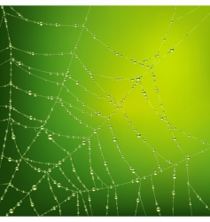 spider web with water drops vector image vector image