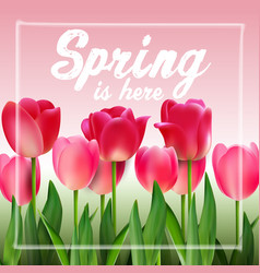 Pink tulips on background pink vector