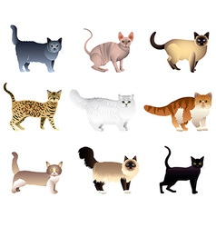 Cats set vector