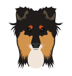 isolated collie avatar vector image vector image