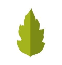 Leaf icon nature and green design graphic vector