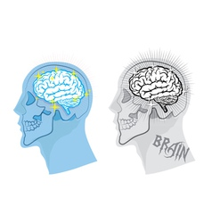 Bright brain in skull vector