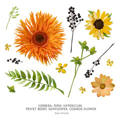 Flower elements set collection various flowers vector