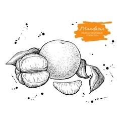 Hand drawn mandarin set engraved vector