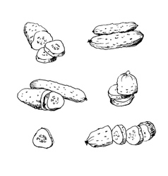 Cucumber hand drawn vector