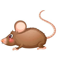 A rat with a long tail vector image