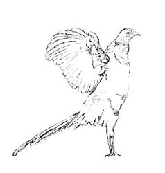 Hand drawn bird doodles vector image