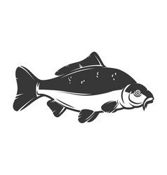carp fish isolated on white background design vector image vector image