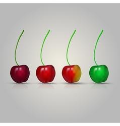 four cherries vector image vector image
