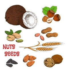 Nuts seeds beans and cereal sketch symbol vector