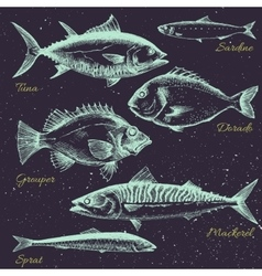 Hand drawn sea life vector