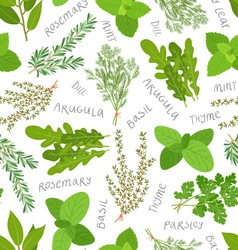 Herbs pattern on white vector image vector image